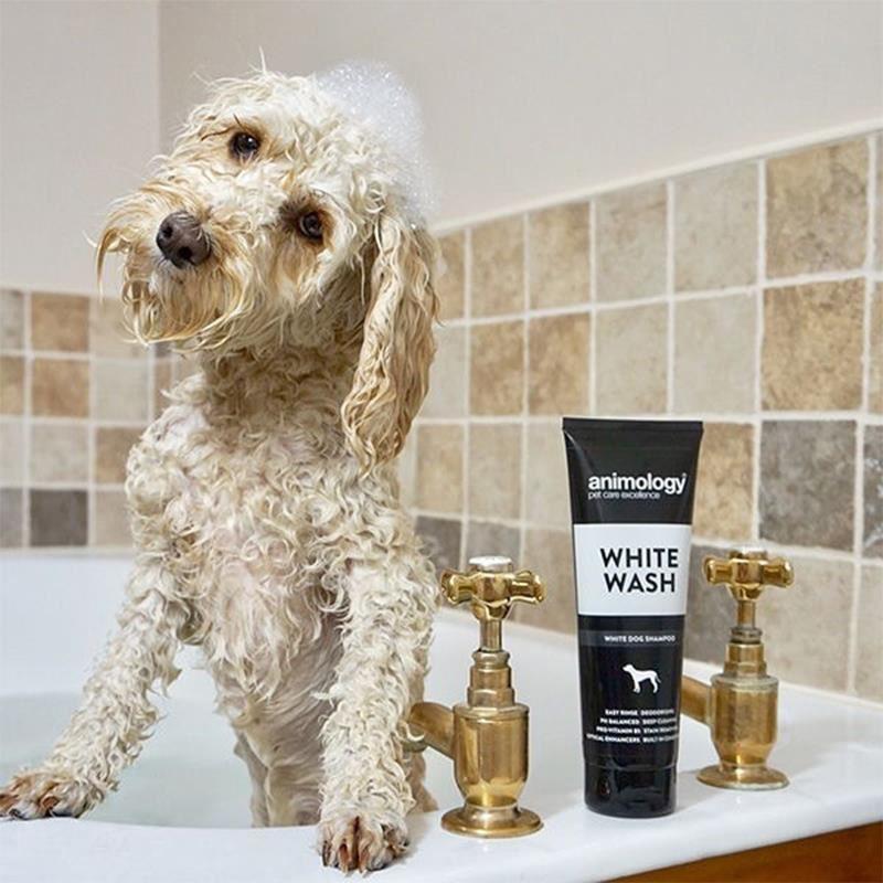 Animology White Wash Beyaz Tüylü Köpek Şampuanı 250 Ml