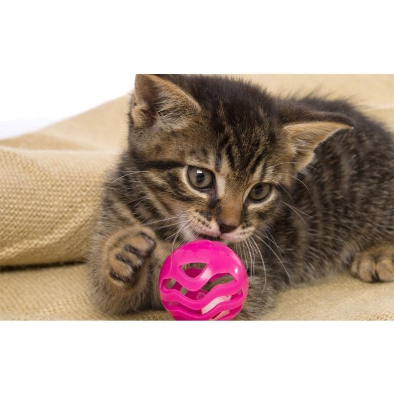 Hartz Jfc Midnight Crazies Ctoy Çıngıraklı Kedi Oyuncağı